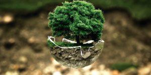 Umweltschutz Klimaschutz Baum