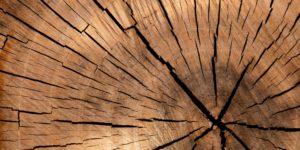 Baum Querschnitt © Pixabay 2020 / Foto: PublicDomainPictures