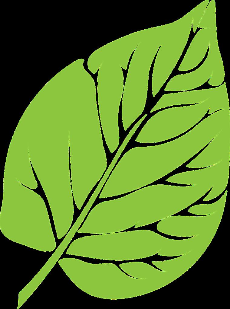 Blatt © Pixabay 2020 / Foto: rsull