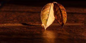 Blatt Herbst © Pixabay 2020 / Foto: stevepb