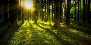 Wald © Pixabay 2021 / Foto: jplenio