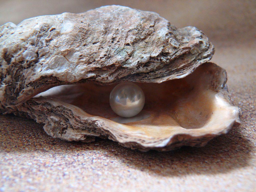 oyster © Pixabay 2021 / image: Moritz320